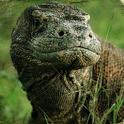 EI: Komodo Island icon