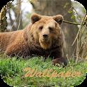 Bear Wallpaper HD icon