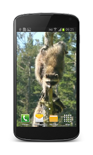 Raccoon Free Video Wallpaper- screenshot thumbnail
