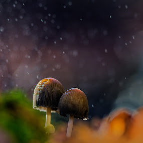in the woods by Melchiorre Pizzitola - Nature Up Close Mushrooms & Fungi ( mushrooms /nature /wildlife /woods /rain )