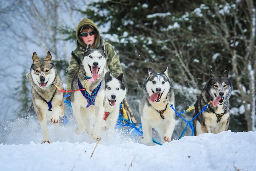 Brady and the Pack by Roberta Janik - Sports & Fitness Snow Sports (  )