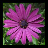 Summer Flowers: Memory (Free)