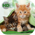 Wallpapers Cats - Nice Cats icon