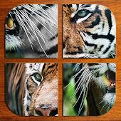 Animals: Puzzle Box