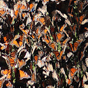 Monarch cluster