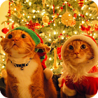 Christmas Cat Live Wallpaper icon
