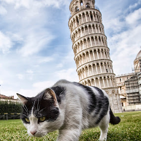 Lovely cat from Pisa~ by Alexander Yap - Animals - Cats Playing