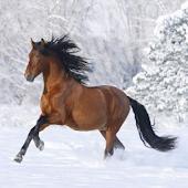 Horses Gallerygame LWP