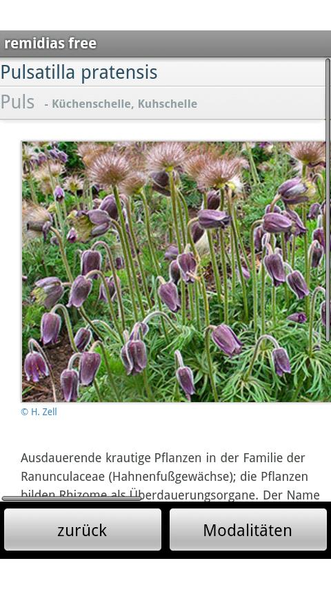 remidias free Homeopathy Rep- screenshot