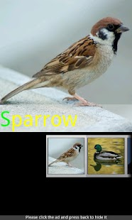Bird Sounds & Ringtones- screenshot thumbnail