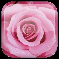Rose Live Wallpaper 1.0.9