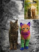 Screenshot of Color Effects Photo Splash