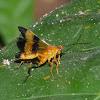 Ichneumonid wasp