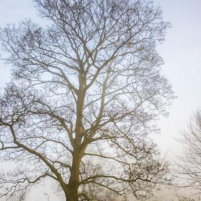 Misty Morning by Barrington Dent - Landscapes Weather (  )
