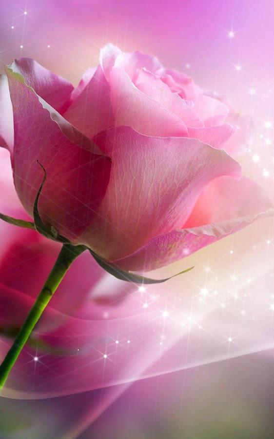 3d rose live wallpaper 9apps