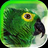 Parrot Gallery live wallpaper