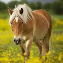 Cute Animals Wallpaper Horses icon