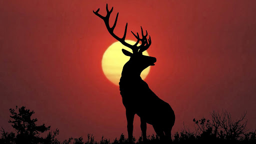 玩個人化App Deer Wallpapers免費 APP試玩
