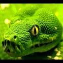 Lizard Snake Live Wallpaper icon