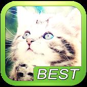 Cat kitten puzzle game