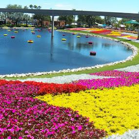 Flowers by Toni Haas - Flowers Flower Gardens ( gardens, epcot, flowers )