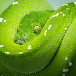 2015-01-24 - green snake-1.jpg