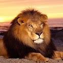 Wild  Animal -Free logo