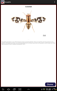 Drosophila- screenshot thumbnail