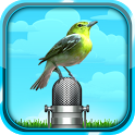 Bird Sound and Picture icon