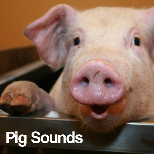 Pig Sounds LOGO-APP點子
