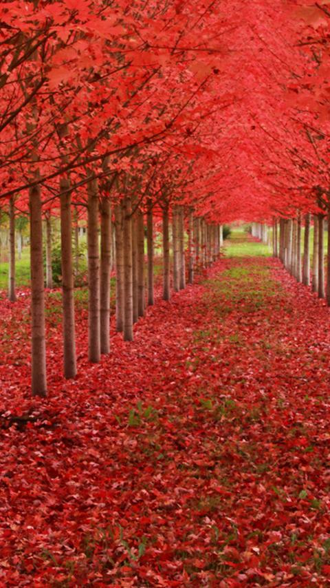 لغز الطبيعة جميلة الصورة لعبة!- screenshot