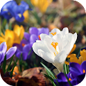 Amazing Spring Flowers icon