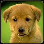 Dogs Memory Game Free Apk