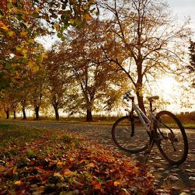 by Nataša Kos - City,  Street & Park  City Parks