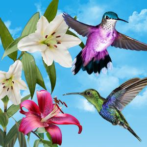 sky birds live wallpaper apk