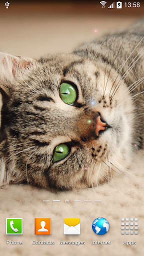 Cat Live Wallpaper 1.0.8 screenshots 3