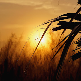 Pine Island Sunrise by Mary Gerakaris - Landscapes Sunsets & Sunrises ( dramatic landscapes, dramatic lighting, corporate office art, sunrises, artistic photography, florida sunrises, florida landscapes, florida beauty,  )