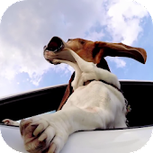 Dog in car Video LWP