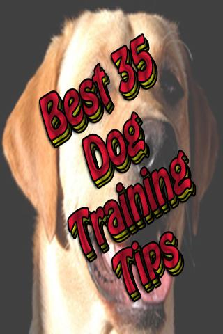 Best 35 Dog Training Tips