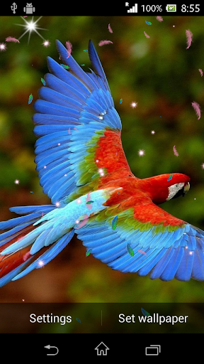 Parrot HD Wallpaper Live