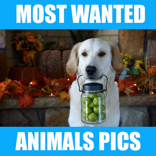 Most Wanted Animal Wallpapers