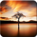 Autumn Trees Photography icon