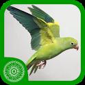 Burung Parkit icon