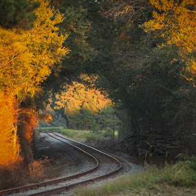 Golden Hour on the Tracks by Lou Plummer - Novices Only Landscapes ( nature, railway, railroad, sunshine, golden hour,  )