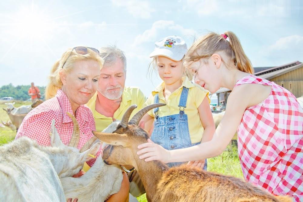 Der Hof der Familie Klußmann bietet Spaß für die ganze Familie: Streichle die kleinen Babyziegen oder genieße den leckeren Käse