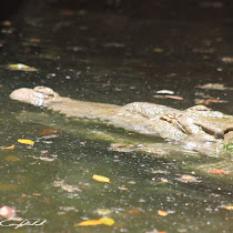 Parque Zoologico Arlen Siu