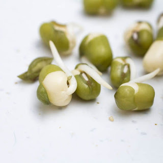 How to Sprout Mung Beans.