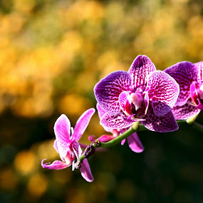orchides II by Almas Bavcic - Flowers Flowers in the Wild