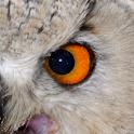 Animal Eyes icon