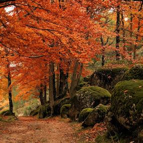 A Caminho do Paraíso(Neste caso do Poço do Inferno) by Ed  von Ems - Landscapes Forests